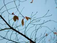 冬は乾燥と血行不良を対策して抜け毛を防ぐ